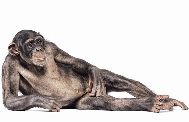 Creature: Andrew Zuckerman. Фотографии животных.