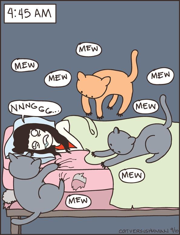 Cat vs Human.