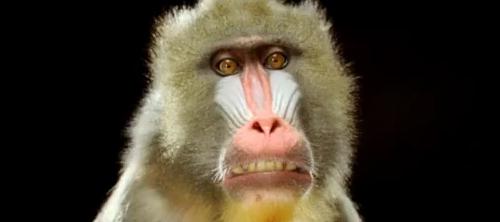 обезьяны и печатные машинки.