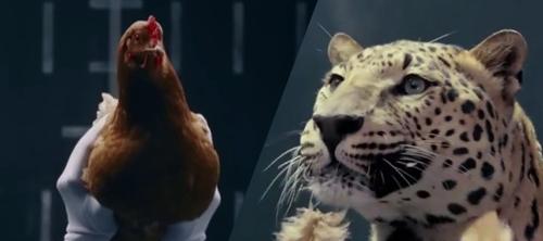 Jaguar vs Mercedes: кошки против кур.