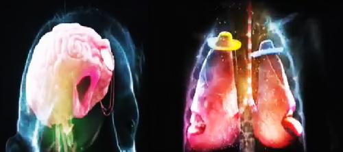 Мозг, мышцы, лёгкие и другие внутренности. В новом видео Nike.