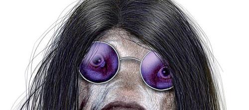 Календарь Pets Rock 2010. Животные в имидже звезд.