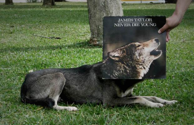 Альбомный арт sleeveface.com.