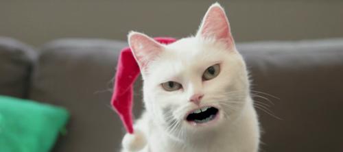 Троло-ло кот от Walmart.
